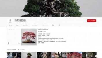 youtube_omiyabonsai