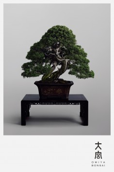 OMIYA BONSAI in Paris